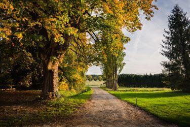 Allée des peupliers en automne
